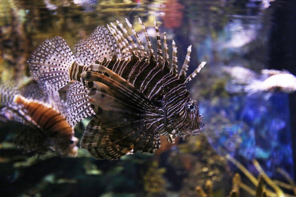 Scorpion Fish - Contact Us